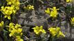 Chilean group creates alternative biopolyol
